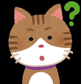 知りたい猫
